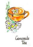 Camomile Watercolor τσάι διανυσματική απεικόνιση