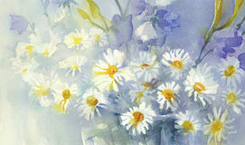 Camomile watercolor background. Watercolor background with camomile meadow. Summer bloom Stock Photo