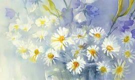 Camomile watercolor background Stock Photo