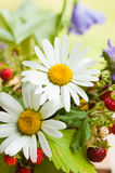 Camomile and wild strawberry Royalty Free Stock Image