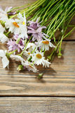 Camomile on wooden background Royalty Free Stock Photo
