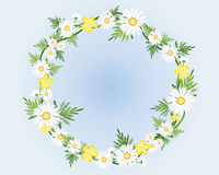 Camomile wreath Royalty Free Stock Photos