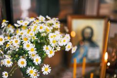 camomiles美丽的花束以耶稣基督为背景一个神圣的象的  免版税库存照片