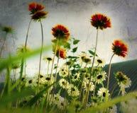 Camomiles über Weinlese-Hintergrund Stockfotografie