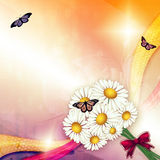 Camomiles и бабочка Стоковая Фотография