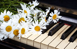 Camomiles. On the old piano Royalty Free Stock Photos