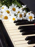 Camomiles. On the old piano Royalty Free Stock Photography