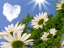 Camomiles. Daisies and a cloud in the shape of a heart Royalty Free Stock Photo