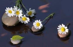 Camomiles bagnati sulle pietre per la stazione termale immagine stock libera da diritti