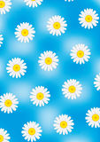 Camomiles on blue vector background. Camomiles on blue cloudy vector background Stock Photo