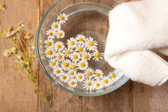 Camomiles in bowl of water Stock Image