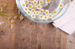 Camomiles in bowl of water Royalty Free Stock Photos