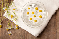 Camomiles in bowl of water Stock Photography