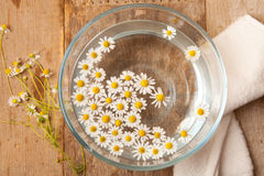 Camomiles in bowl of water Royalty Free Stock Photo