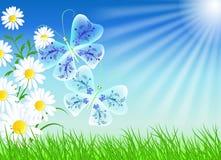 Camomiles com borboletas Imagem de Stock