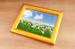 Camomiles field on  frame Stock Photo