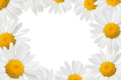 Camomiles frame Royalty Free Stock Image