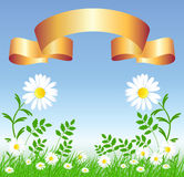 Camomiles with golden ribbon. Camomiles with green grass and golden ribbon Royalty Free Stock Photo