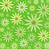 Camomiles on green background. Illustration of camomiles on the green meadow Royalty Free Stock Photography