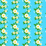 Camomiles jointless pattern. Floral decorative pattern with camomiles Royalty Free Stock Images
