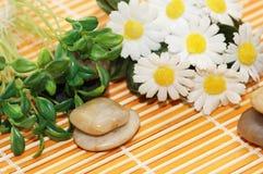 Camomiles, Kräuter und Steine für Badekurortsitzung Stockbild