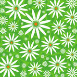 Camomiles no fundo verde Imagens de Stock