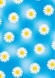 Camomiles op blauwe vectorachtergrond Stock Foto