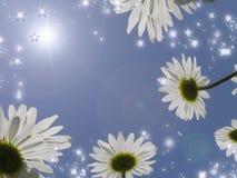Camomiles op een achtergrond van de hemel. Stock Foto