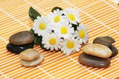Camomiles and pebbles Stock Photography