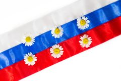 Camomiles on Russian flag Royalty Free Stock Image