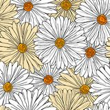 Camomiles seamless background. For pattern or wallpaper design Stock Image