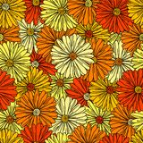 Camomiles seamless background Stock Image