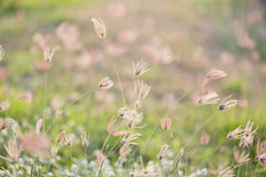 Camomiles on summer field closeup Stock Photo