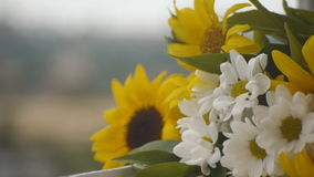 Camomiles and sunflowers on the window sill stock video