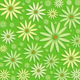 Camomiles sur le fond vert Photographie stock libre de droits