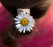 Camomilla in capelli Fotografia Stock