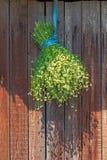 Camomilla del covone secca nella tonalità Fotografia Stock Libera da Diritti