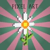 Camomilla del pixel Illustrazione di Stock