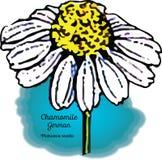 Camomilla, tedesca royalty illustrazione gratis