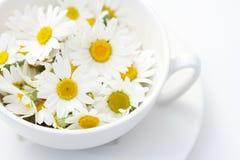 camomille τσάι Στοκ φωτογραφίες με δικαίωμα ελεύθερης χρήσης