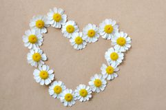 Camomille, coeur, configuration des marguerites Photos libres de droits