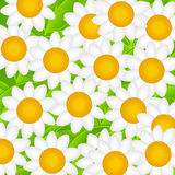 Camomille Daisy Background Vector Illustration Photo stock