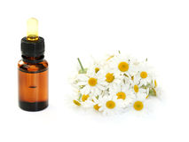 Camomille essential oil Stock Photography