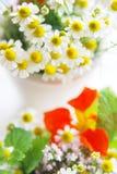 Camomille et fleurs de fines herbes photos stock