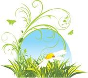 Camomille et herbe. Composition décorative Image stock