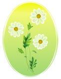Camomille, fleur de marguerite illustration de vecteur