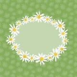 Camomille fleurit la carte de voeux Image stock