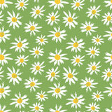 Camomille flowers seamless pattern. Hand painted textured camomille flowers seamless pattern. Vector illustration Stock Image