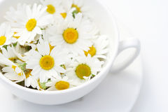 camomille herbata Zdjęcia Royalty Free