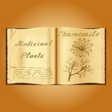 Camomille Illustration botanique Centrales médicales Livre ouvert d'Old de herbalist de livre illustration stock